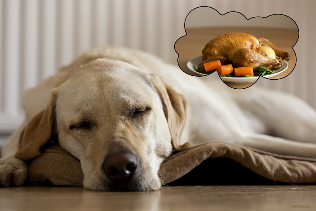 dog turkey.jpg