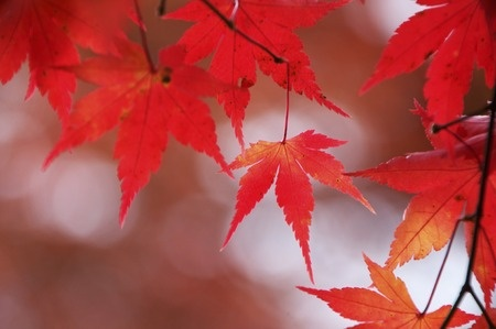 RET Colors of The Fall.jpg