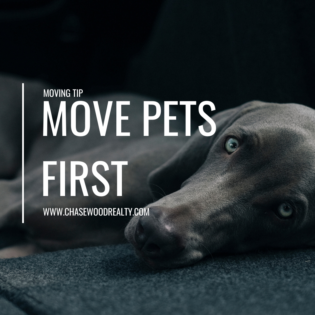 Moving Tips: Have a Pet?