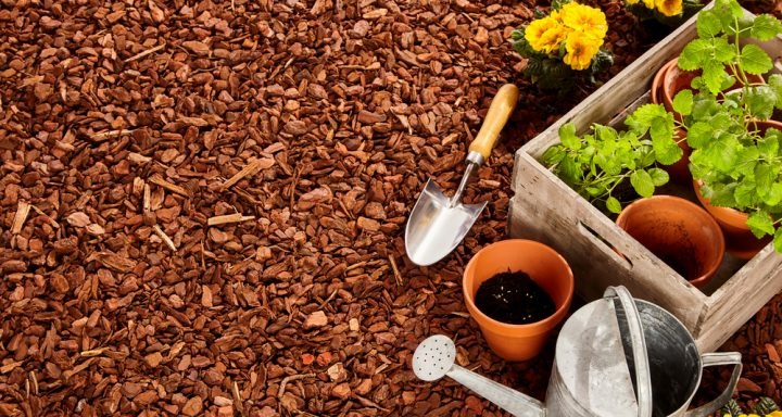 4 Gardening Tips for the Lazy Landscaper