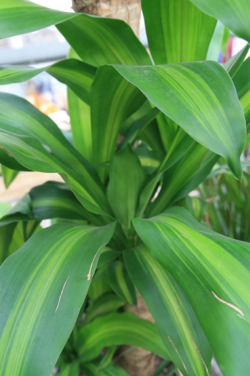 plant7.png