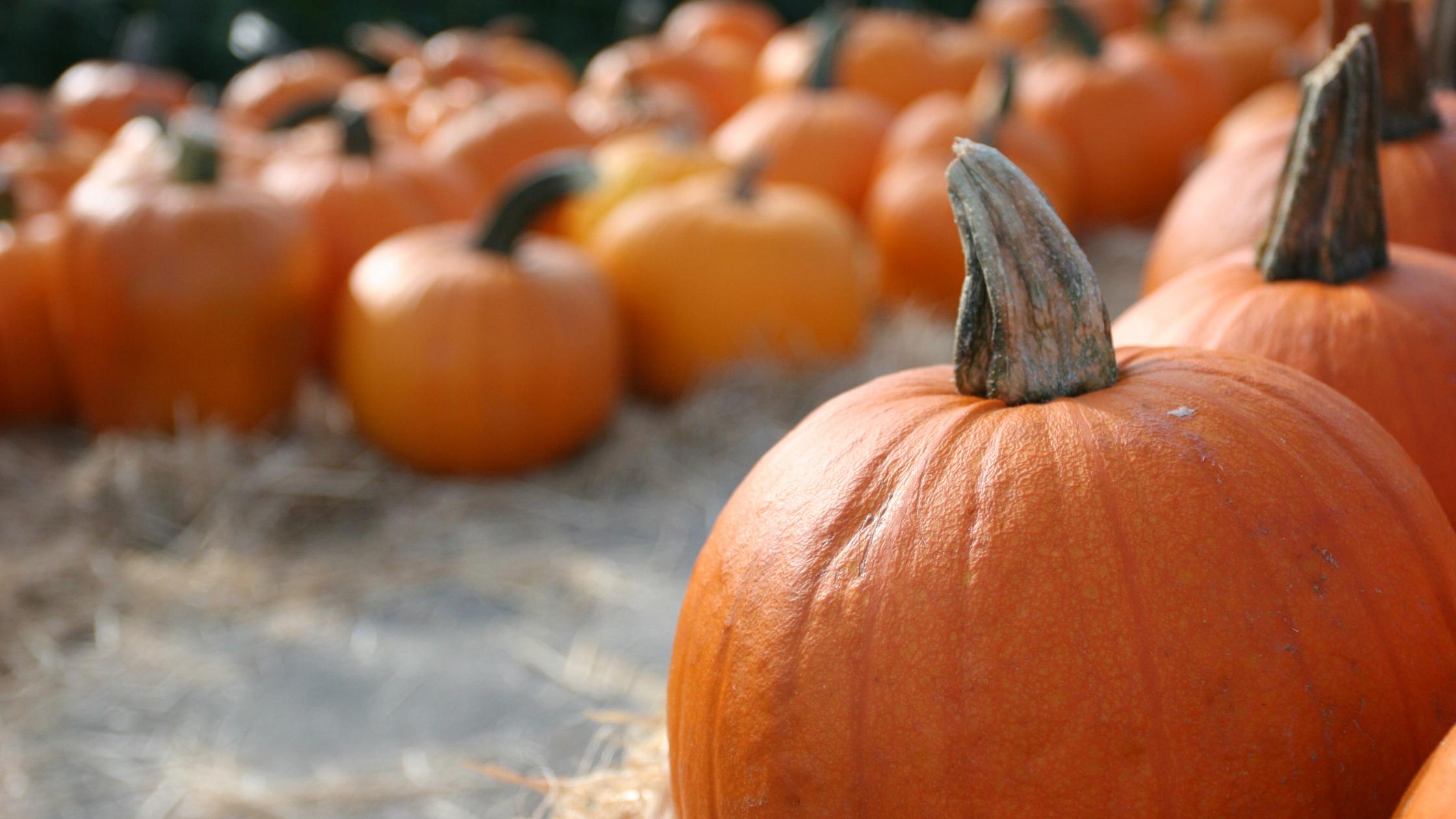 pumpkin patches.png