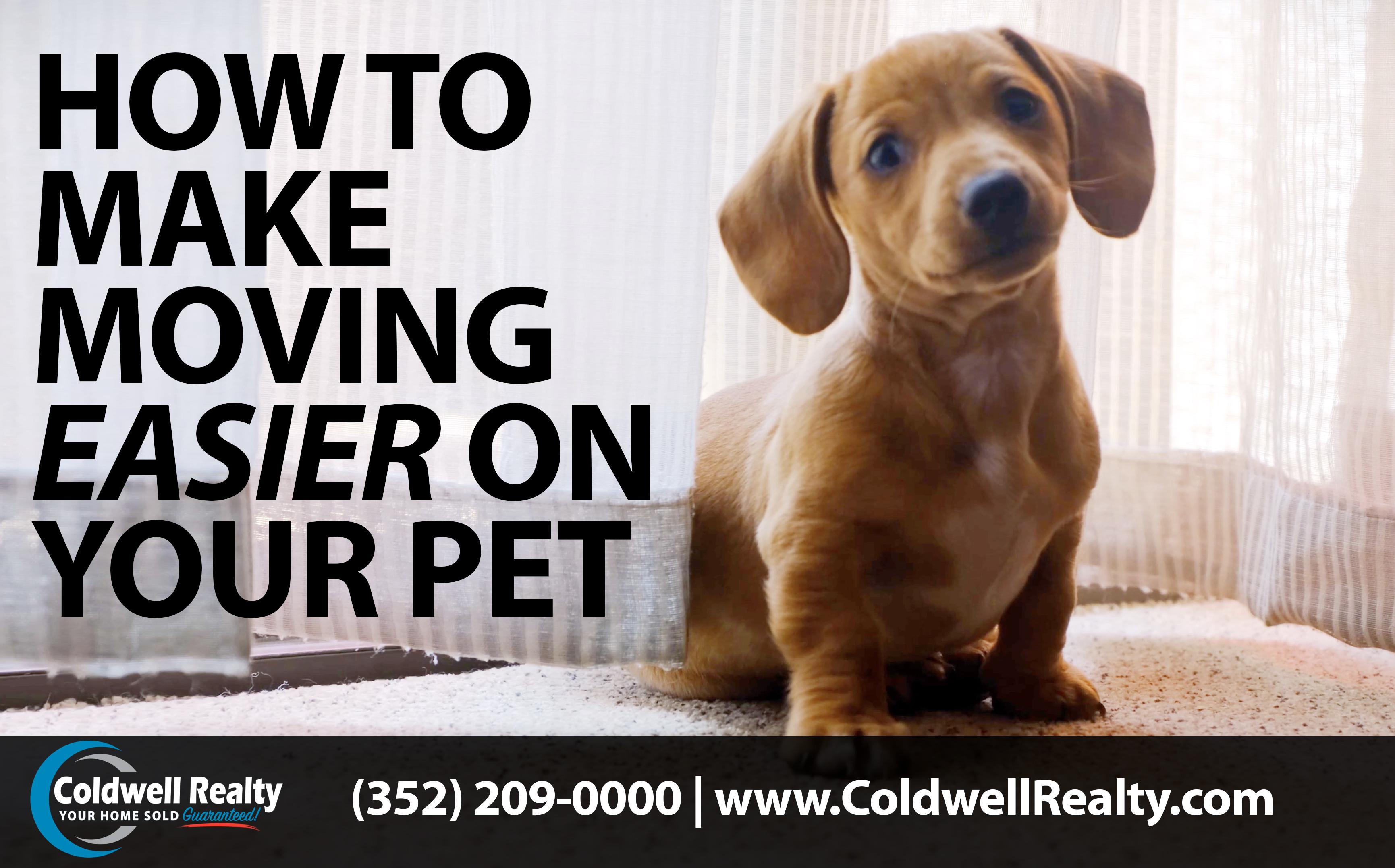Make Moving Easier on Your Pet.jpg