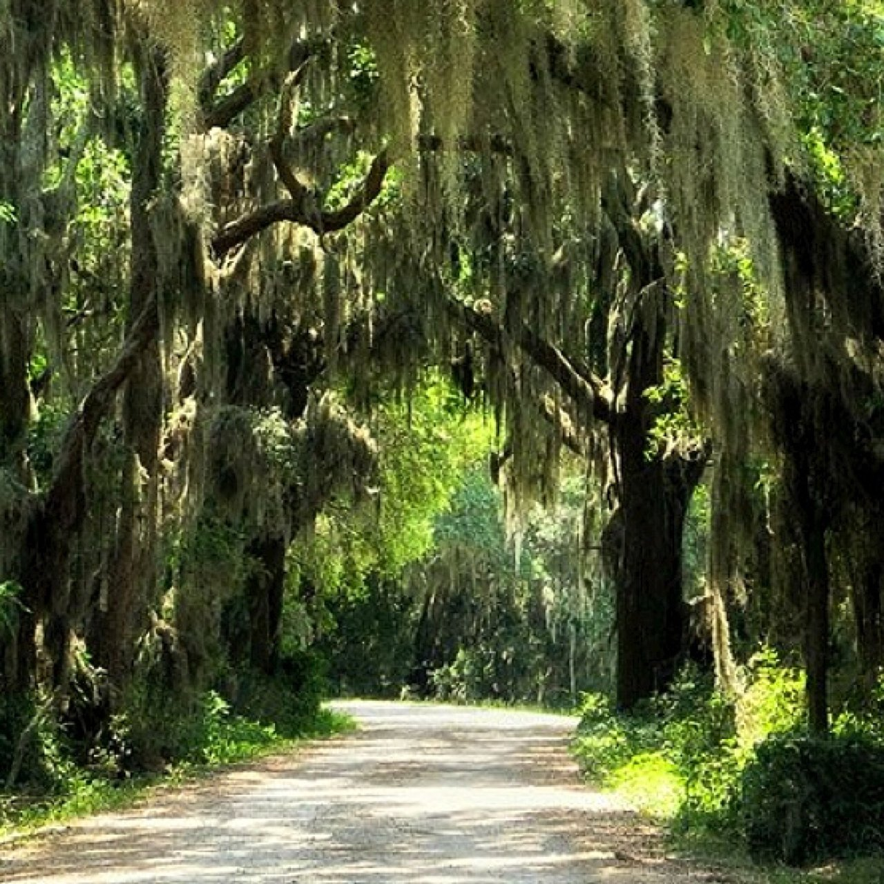 spanish moss trail.jpg