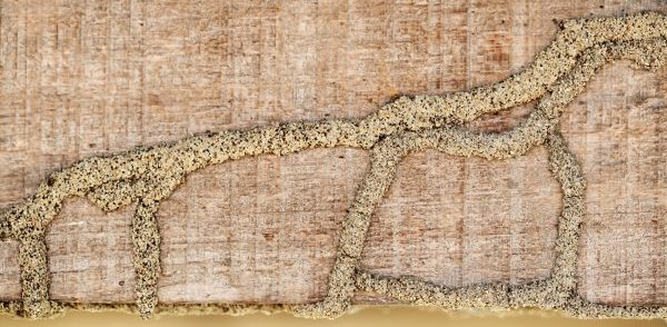 Termite Signs to Look For In Your Home