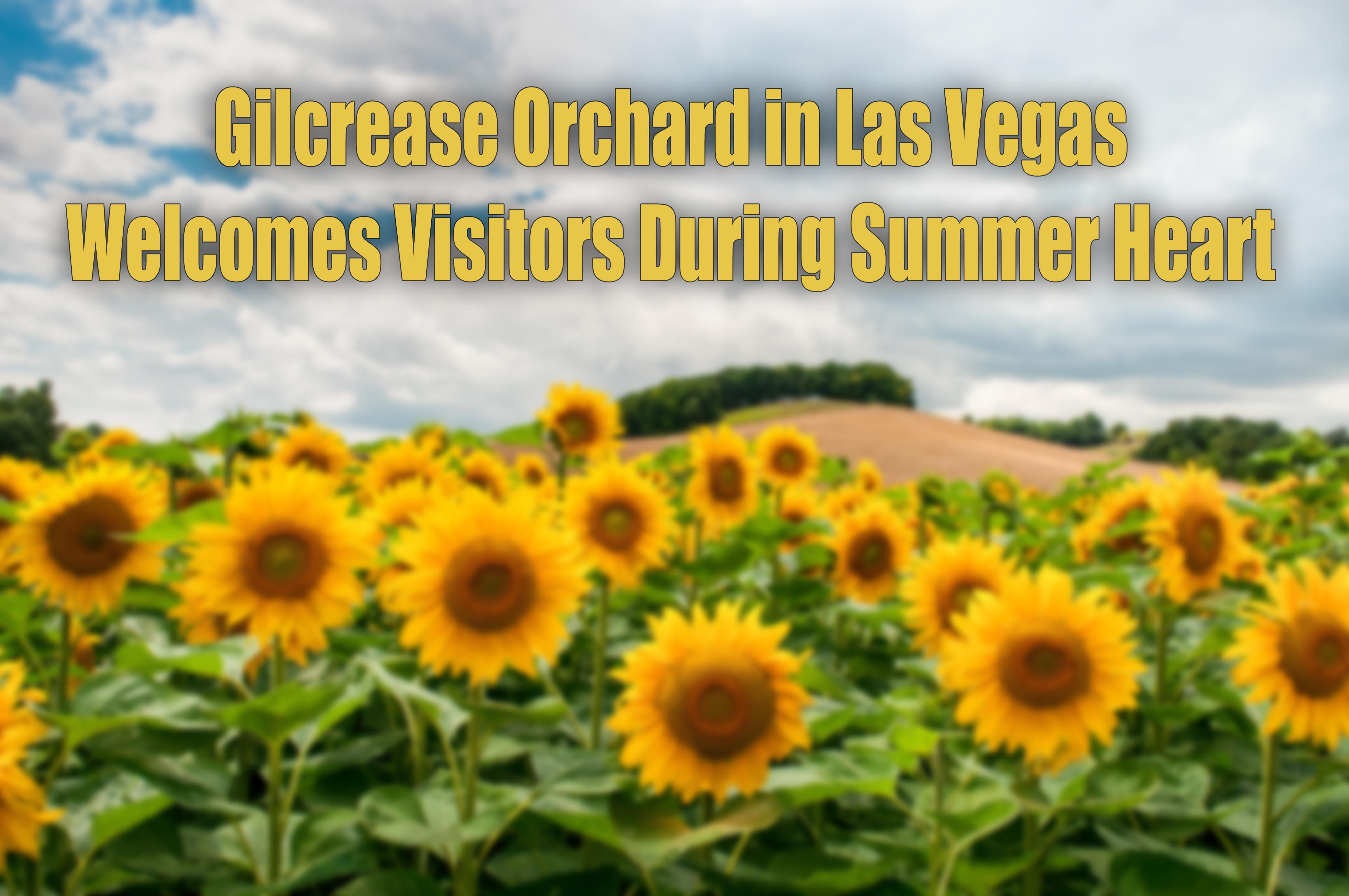 Gilcrease Orchard Las Vegas.jpg