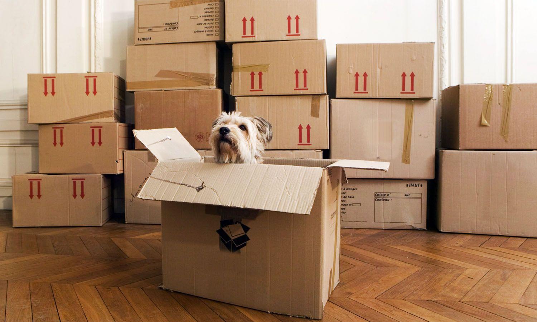 doginbox-5680847f3df78ccc15a49dde.jpg