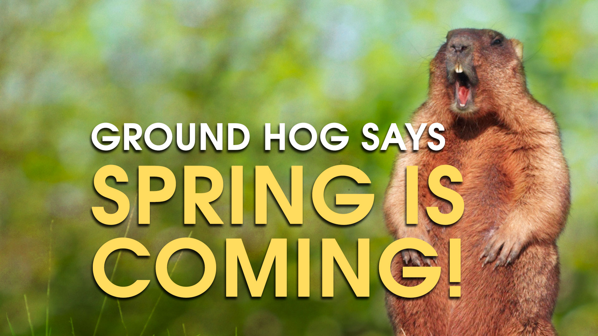 Who Cares if the Ground Hog got it right, Spring is STILL Coming! I promise.