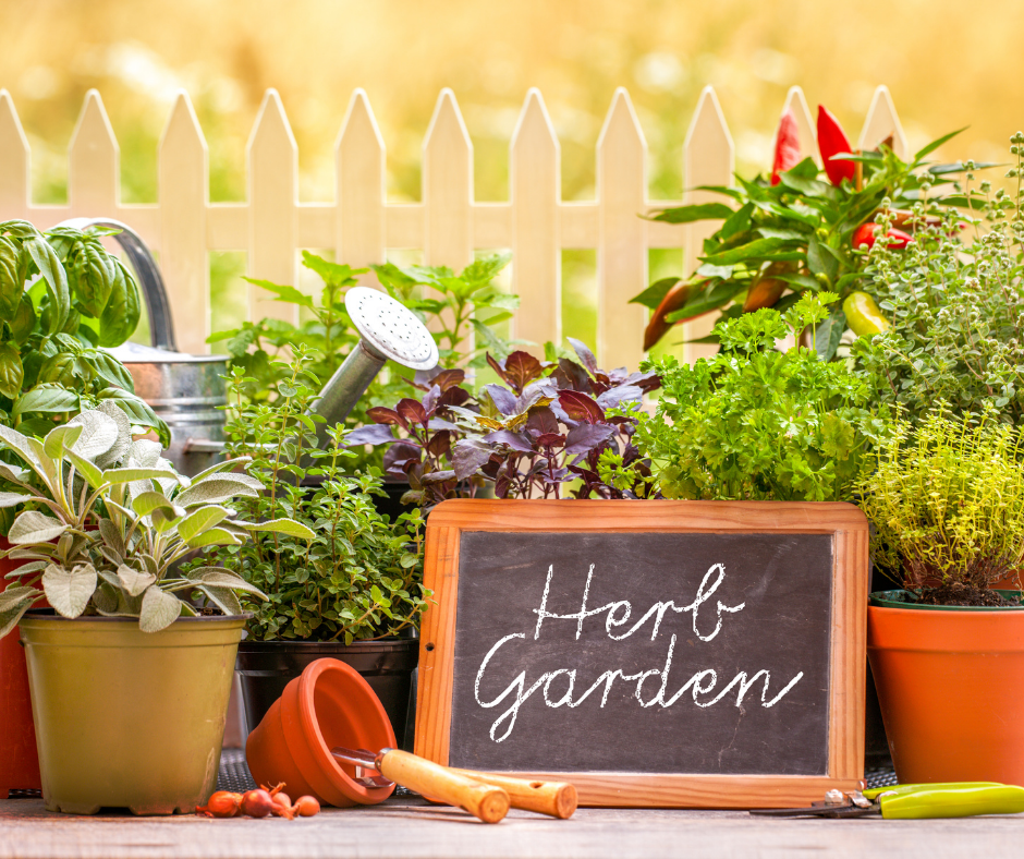 Easy to Grow Herbs for Your Home