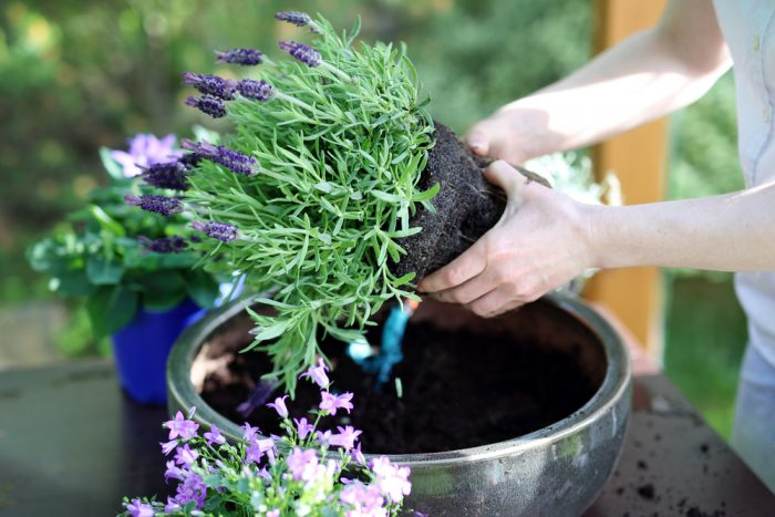 Planting The Perfect Spring Container Garden