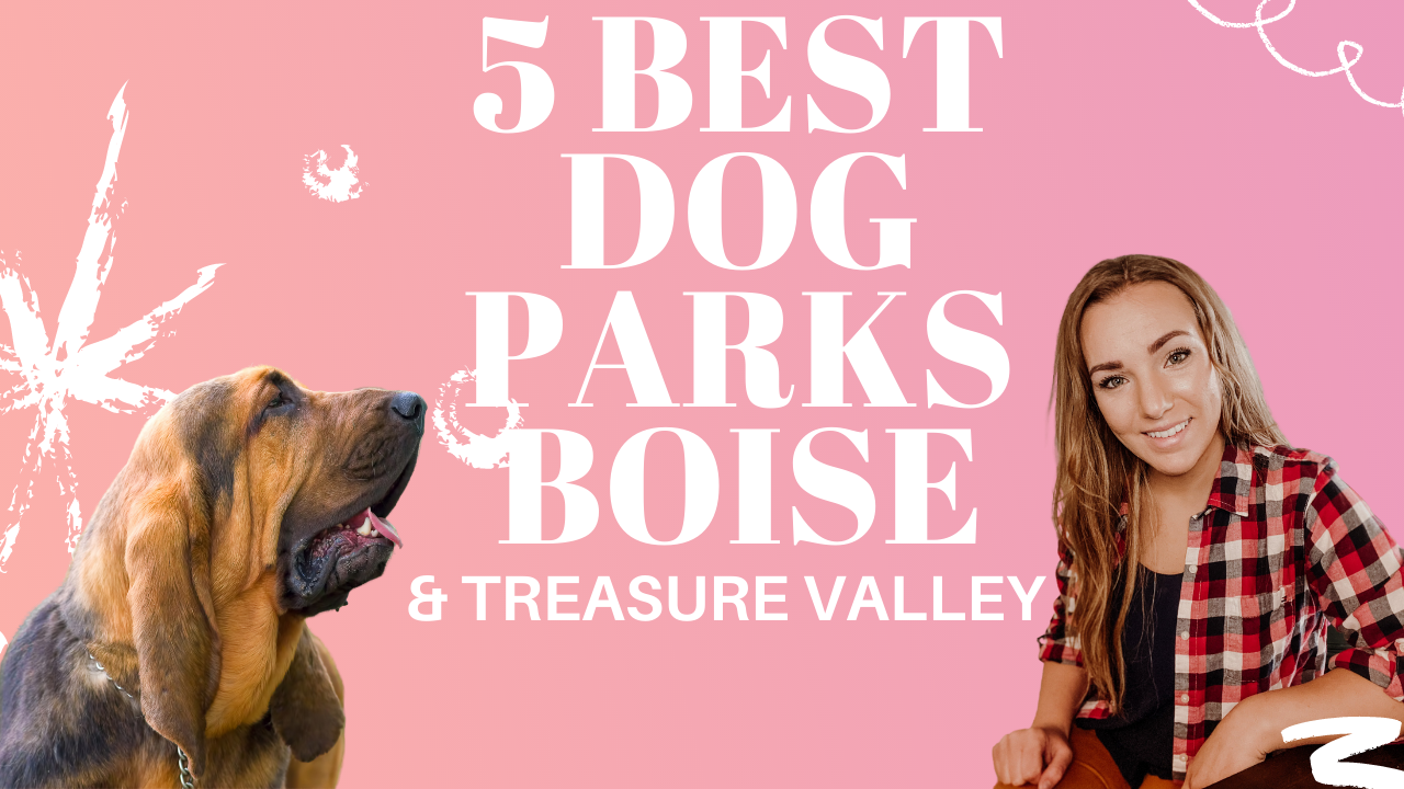 5 Best Dog Parks in the Treasure Valley