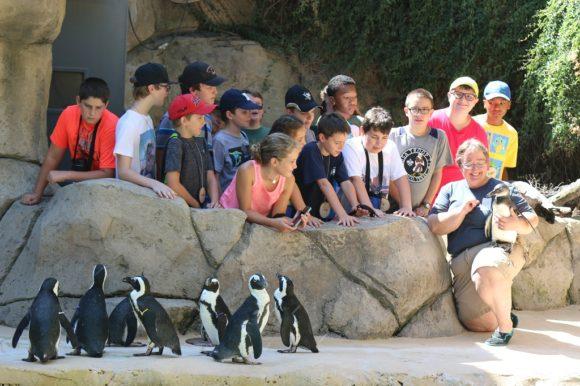 penguins-580x386.jpg
