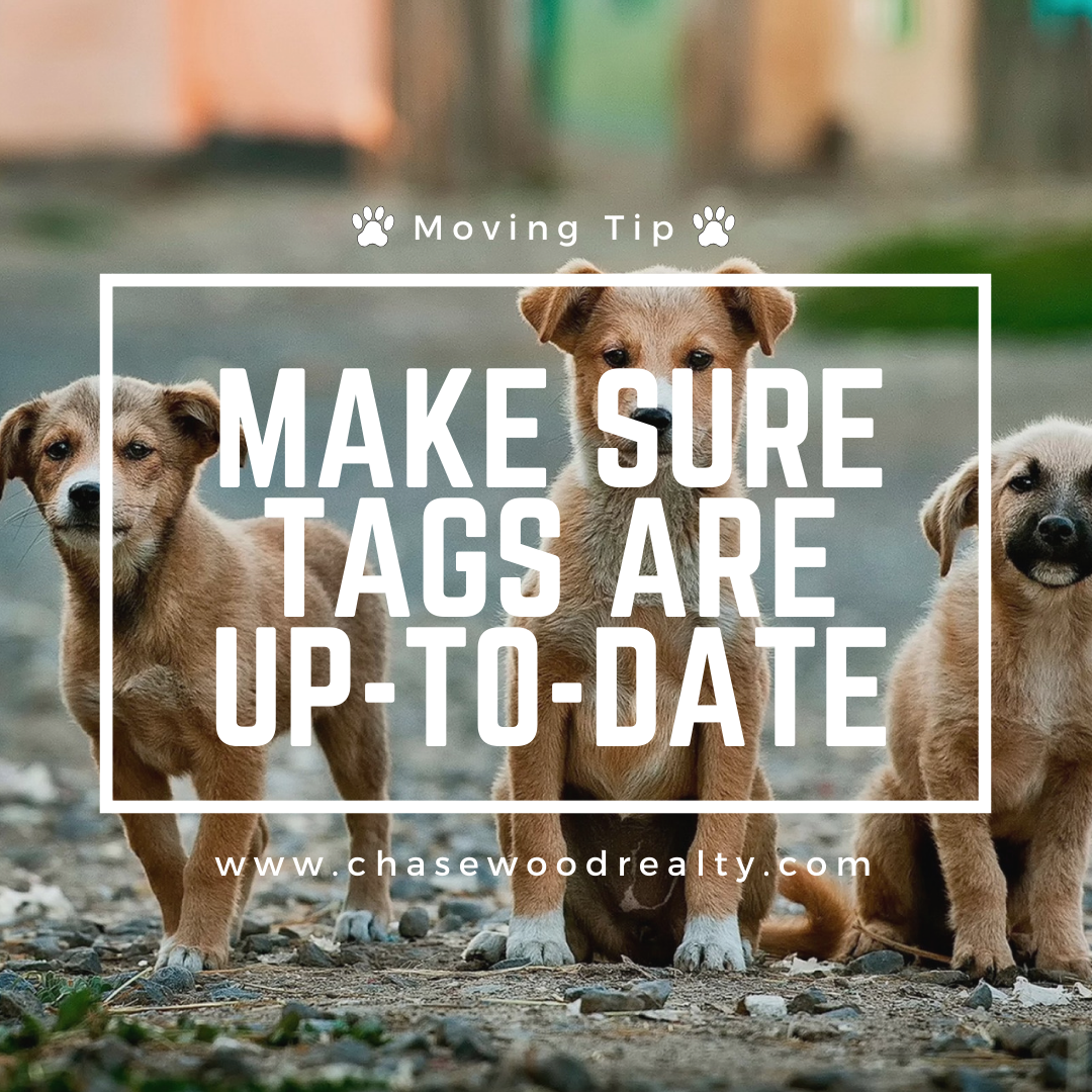 Tips for Moving with Pets Chasewood Realty Karey Kendrick