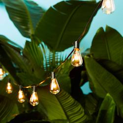 edison lights.png
