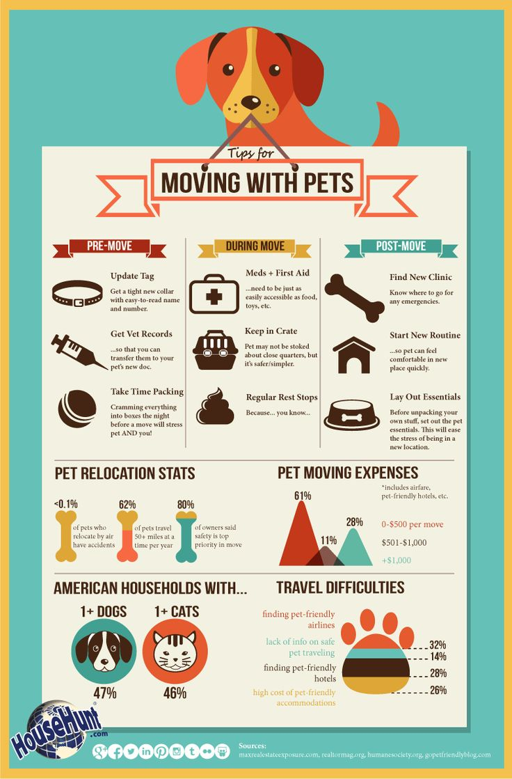Tips-For-Moving-With-Pets.jpg