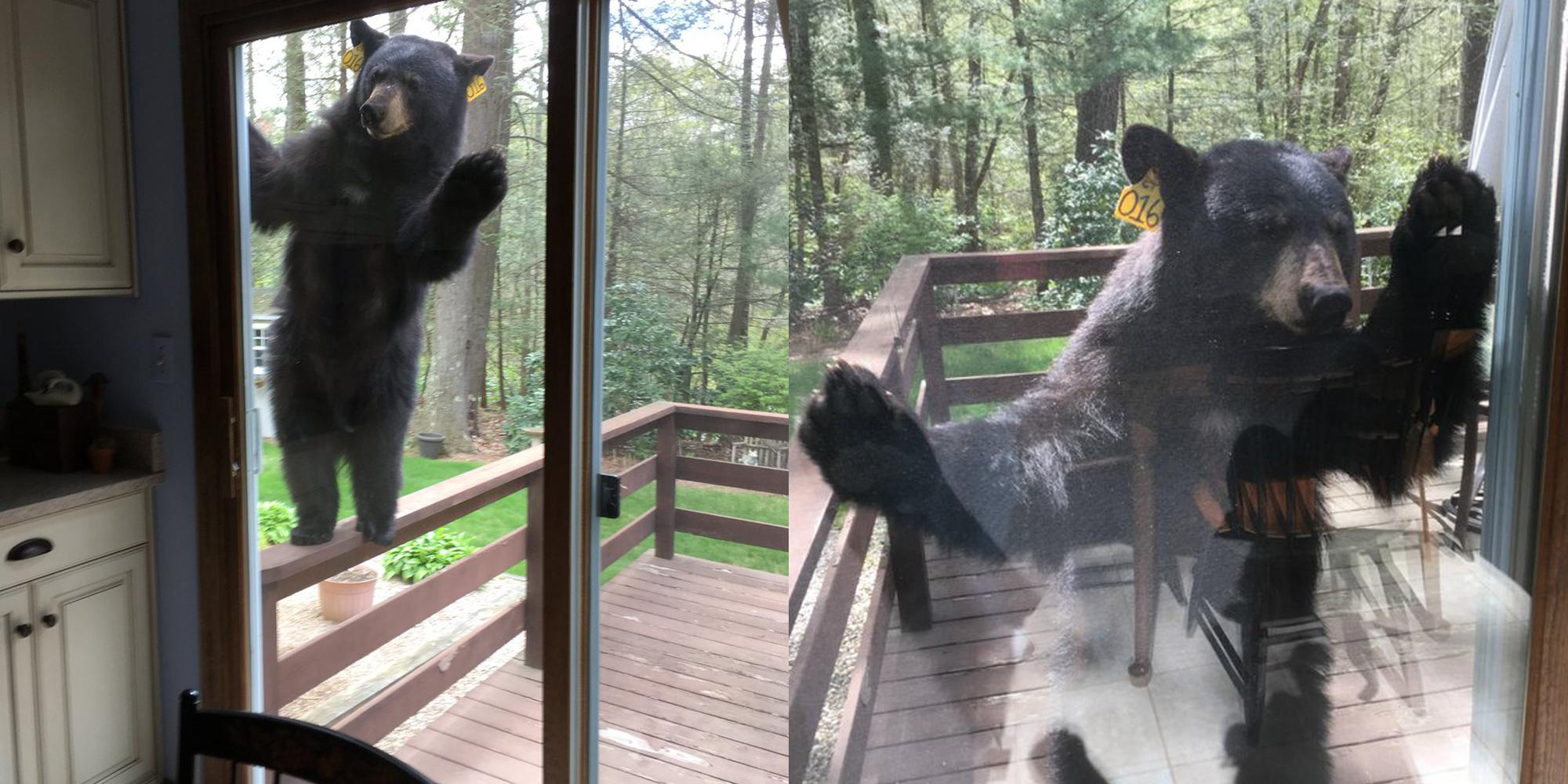 Bear Break-In.jpg