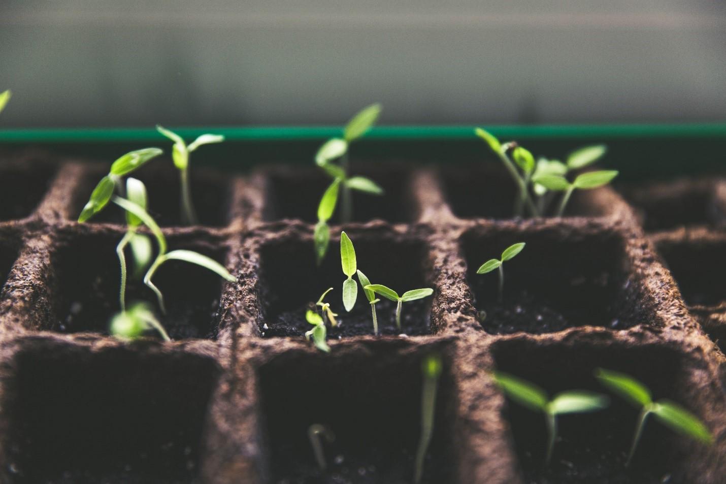 Spring-Planting.jpg