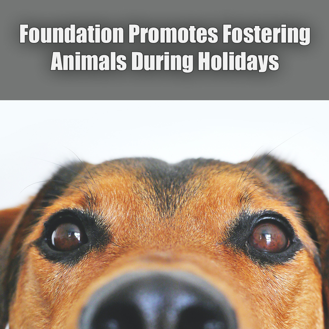 Fostering Animals this Holiday.jpg