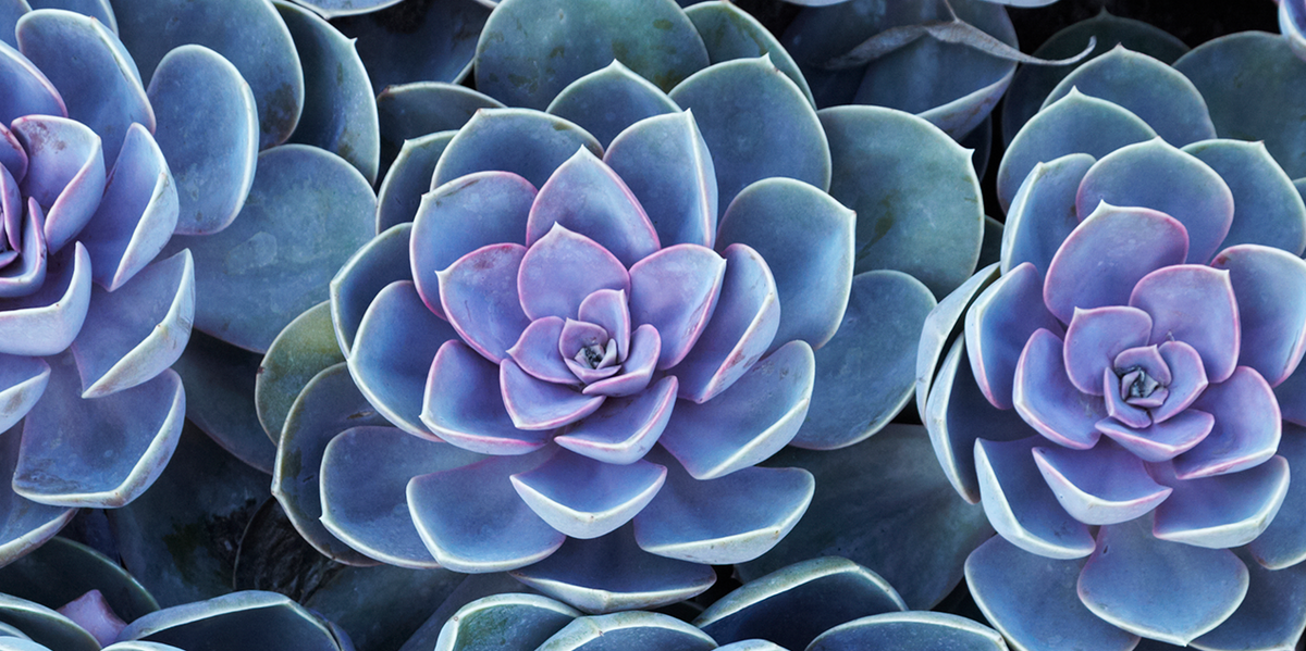 succulents-marquee-v02-1537067815.png
