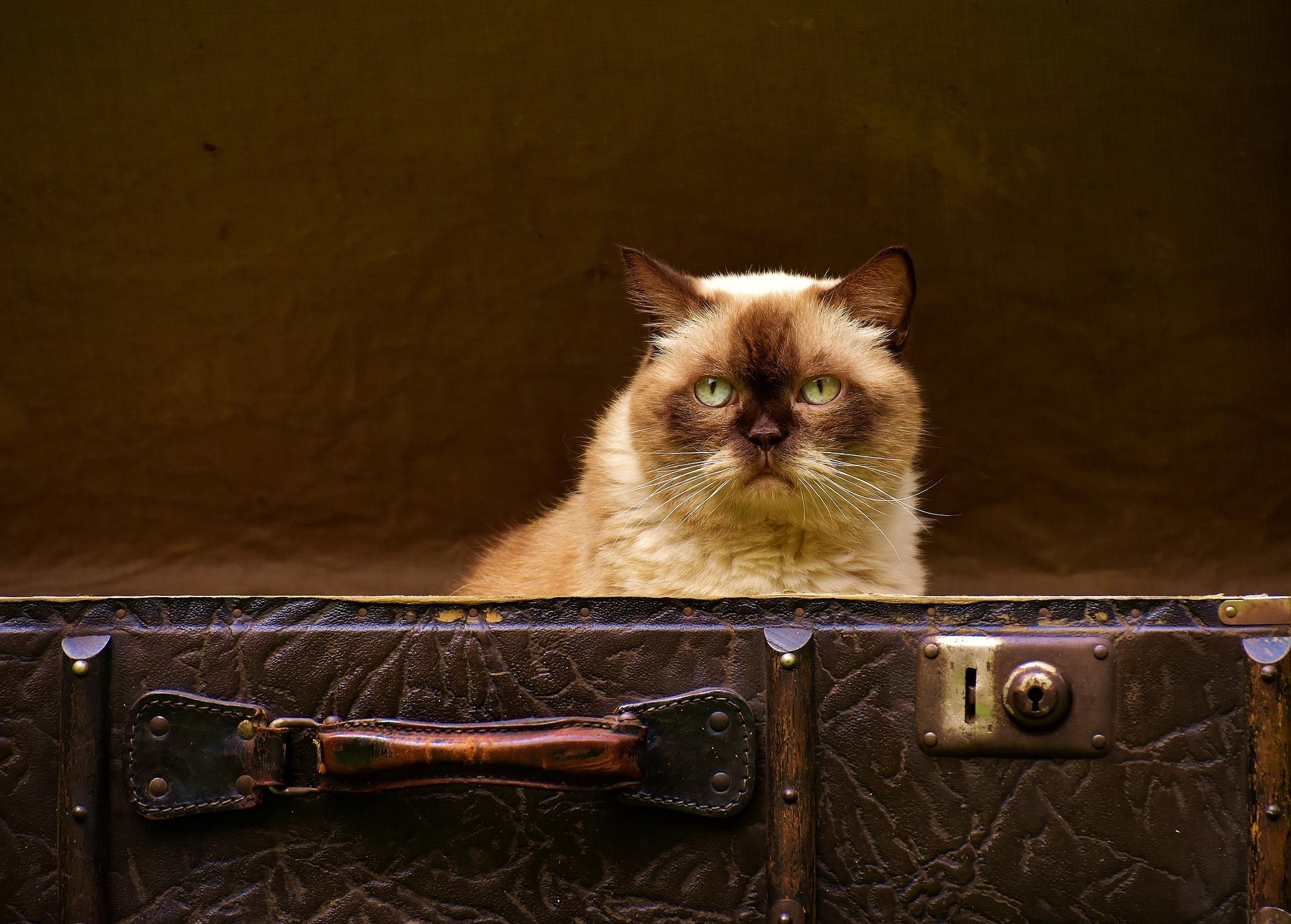 luggage-1645271_1920.jpg