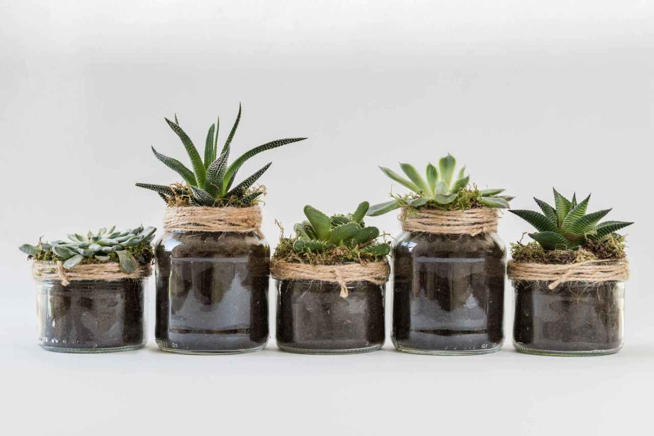 Eye-Catching Ways to Decorate with Plants