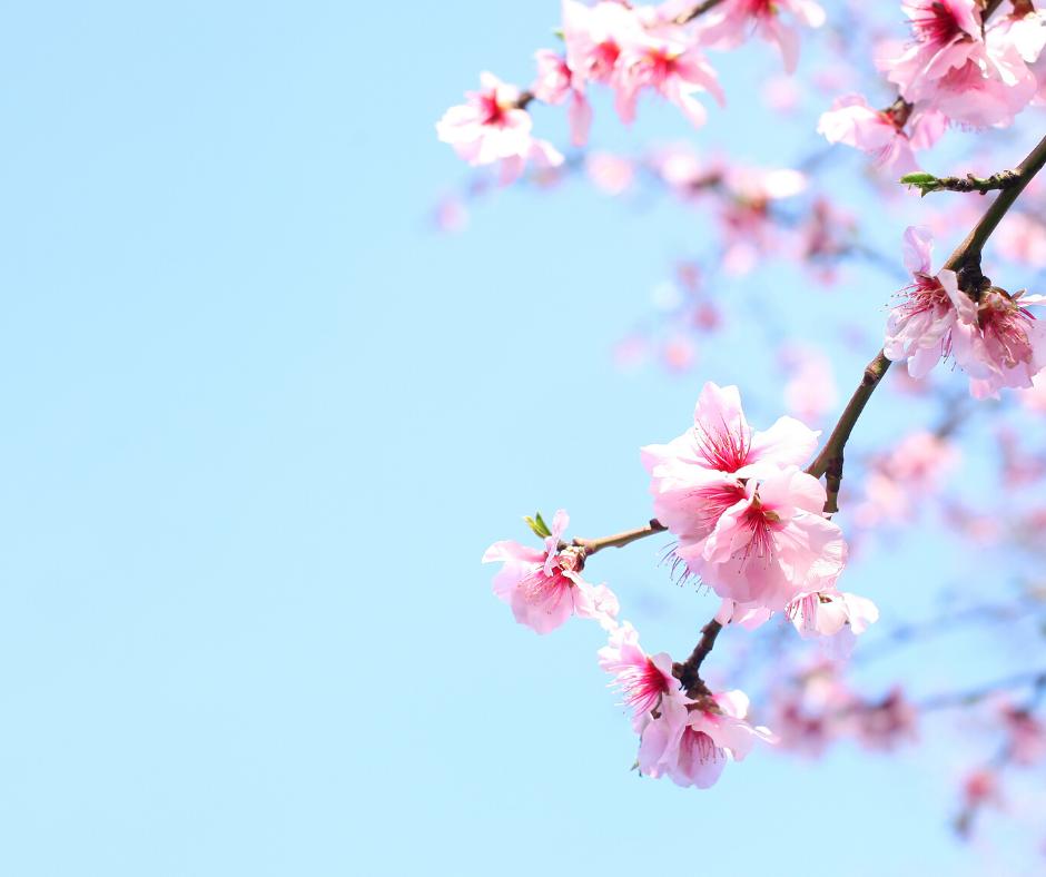 flowers, spring, realestate, ottawa real estate, spring market