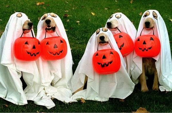 dpgs halloween.jpg