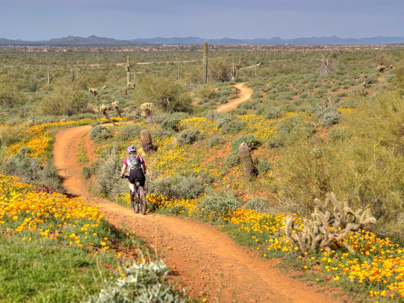 Sonoran-Desert-Loop-Cave-Creek.jpg