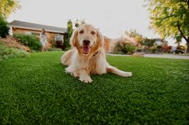 dog on turf 2.jpg