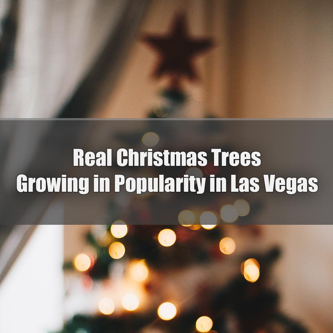 Real Christmas Trees.jpg