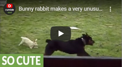 A rabbit and a Rottweiler walked into a blog...