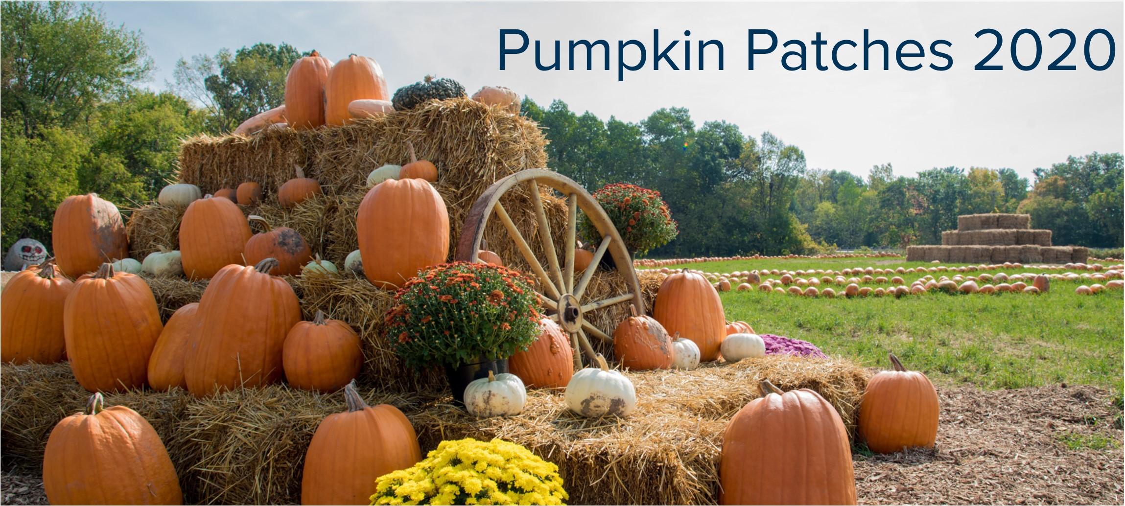 Pumpkin Patches BLOG Header.jpg