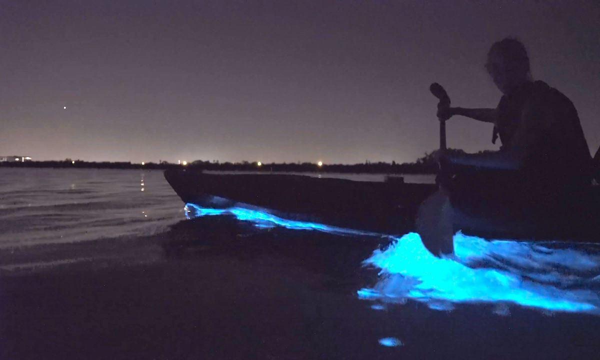 Bioluminescence-kayak-tours-1200x720.jpg