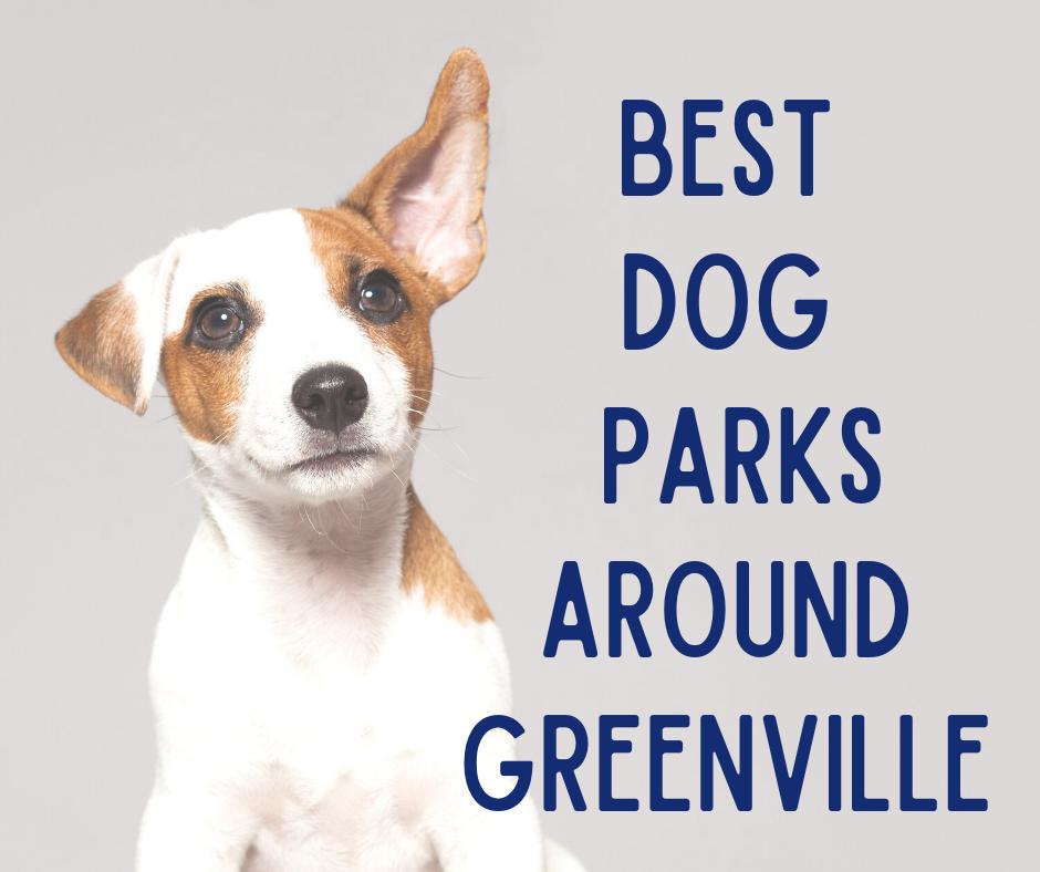 Best Dog Parks Around Greenville
