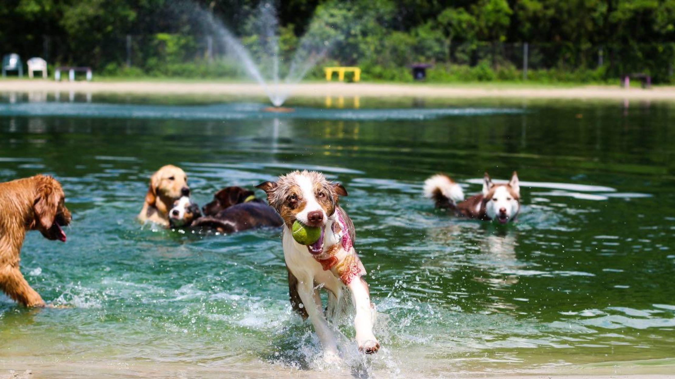 Dog Friendly Activities in DFW