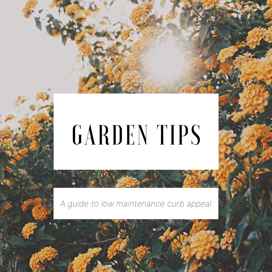 Low Maintenance Gardening Tips