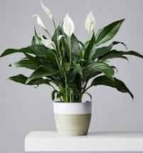 Great Houseplants to improve Air Quality!