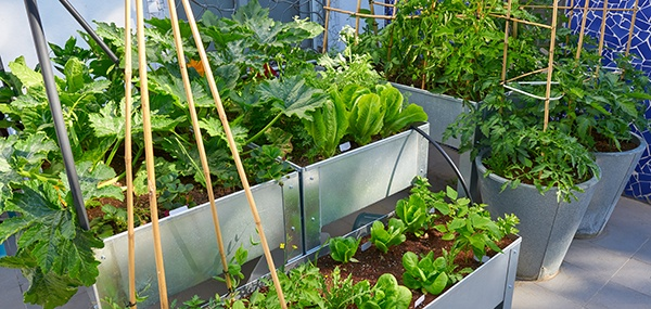 Tips for Gardens Great and Small