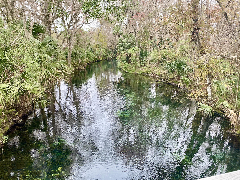Silver Springs State Park--Ocala, FL