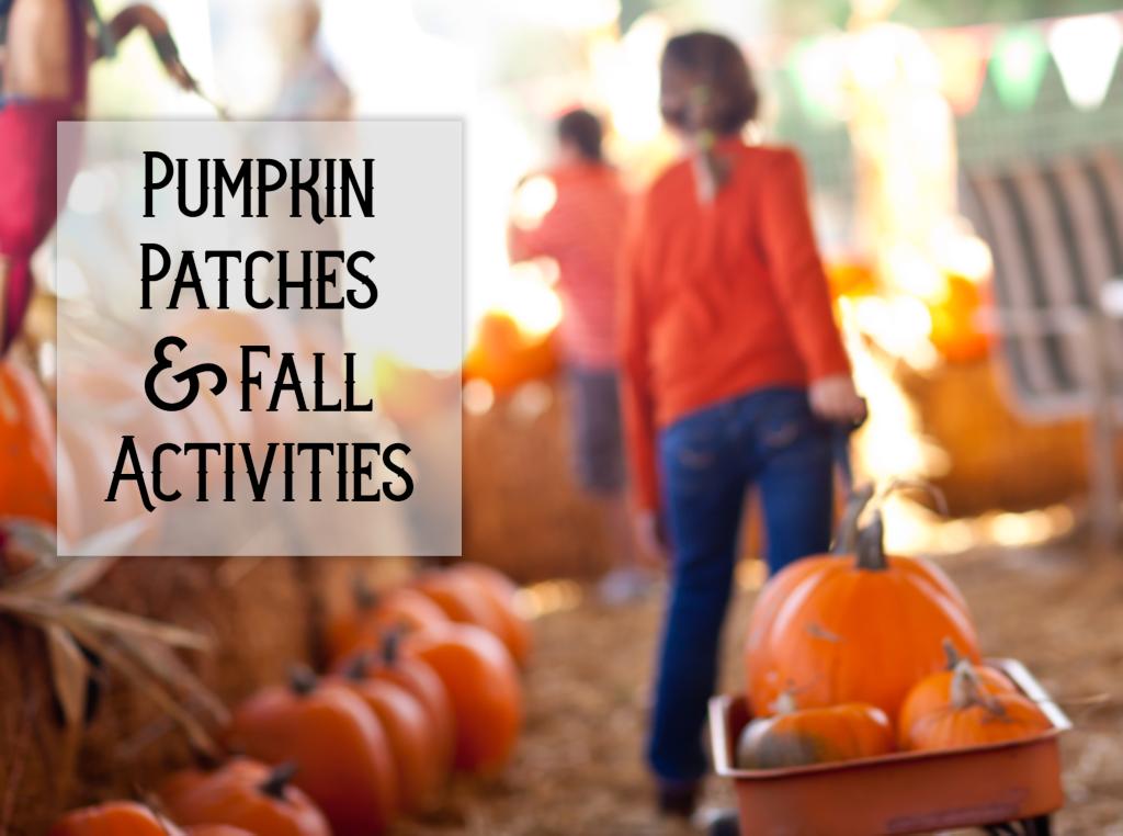 2 pumpkin patch.png