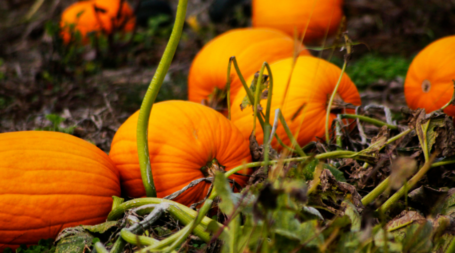 Lowcountry Pumpkin Patches you Need to Visit this Fall!