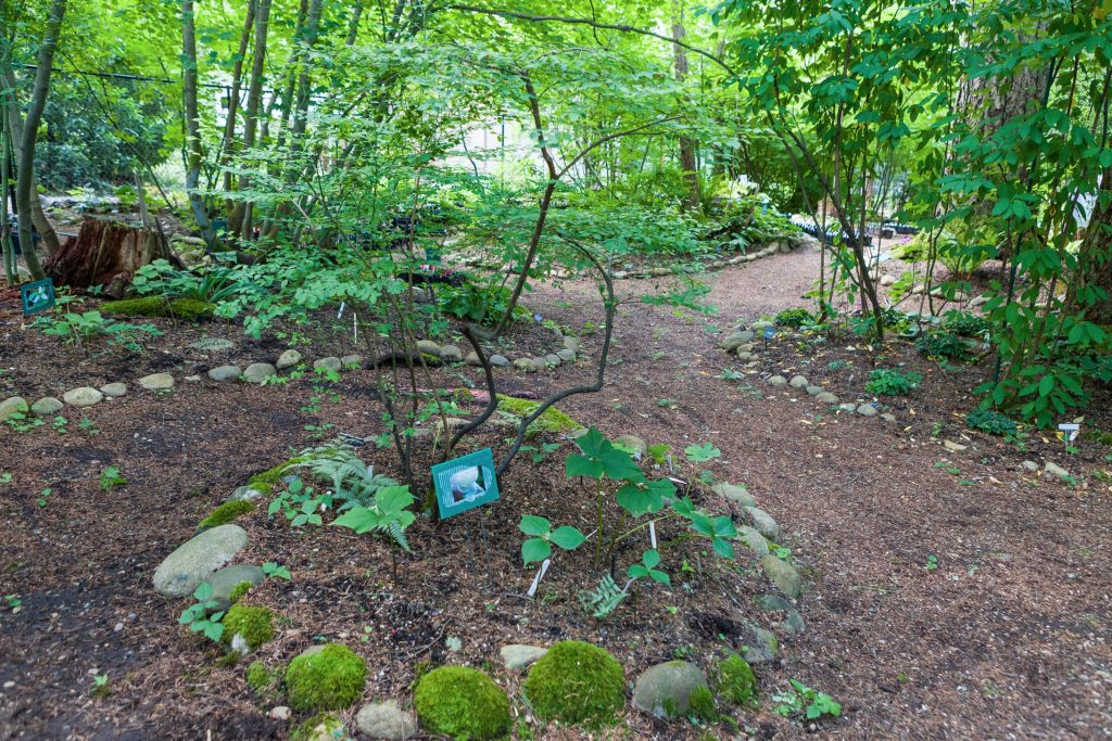 WindermereNorth_Woodinville_Garden-1-1024x683.jpg