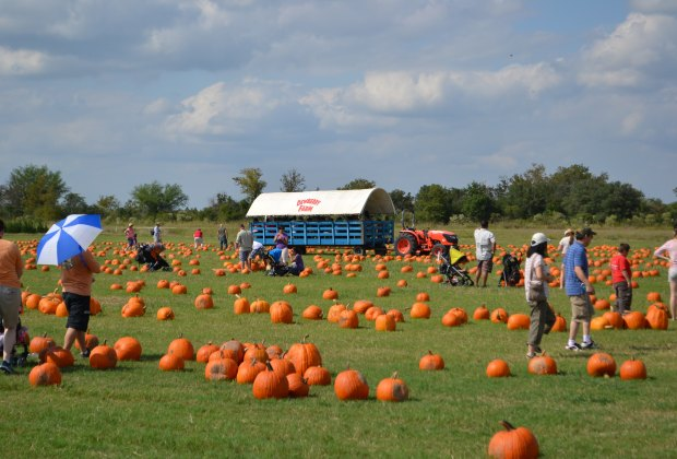 blog pumpkin patch.jpg