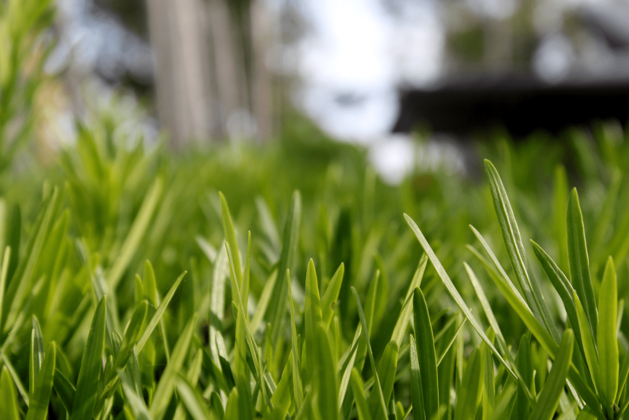 How to Save Money While Landscaping
