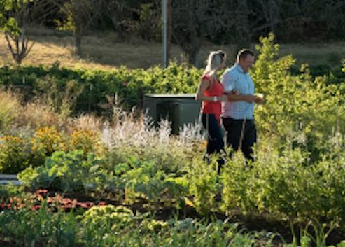 Gardening-Class-at-Brooks-Winery.jpg