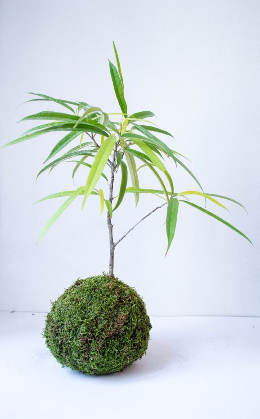 plant8.png