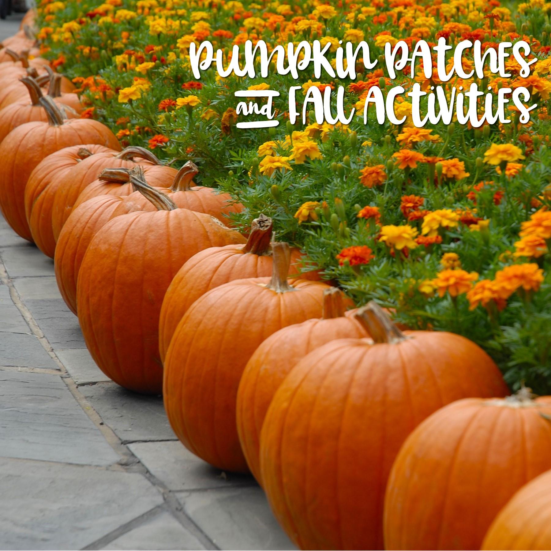 Pumpkin Patches.jpg