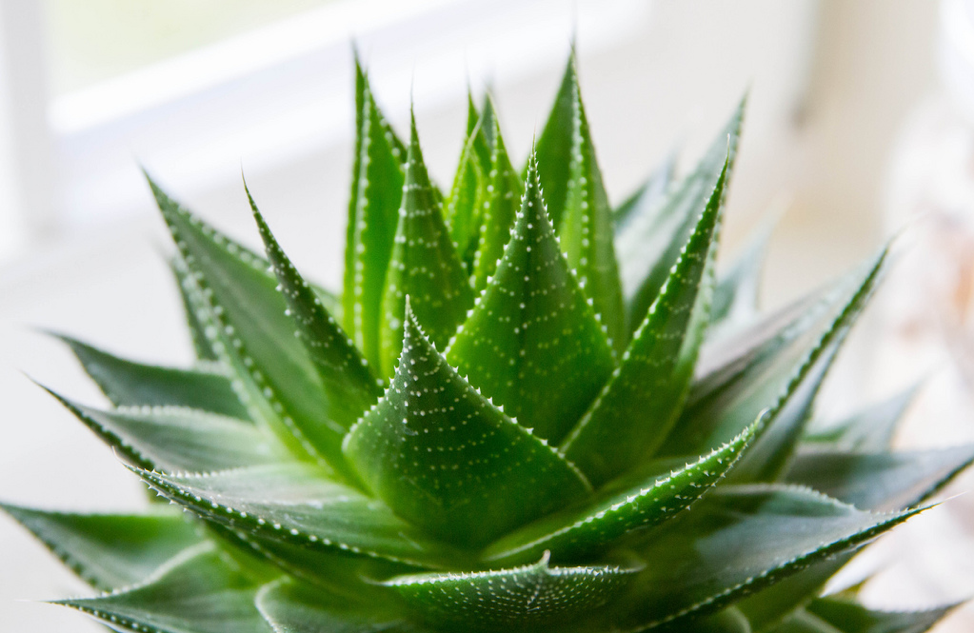 House Plants That Clean Indoor Air