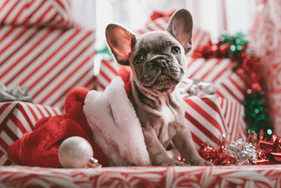 Buying a home during holiday : Boiron Group Christmas 2019 Referral Newsletter